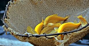 ნაღდი კალმახი სოფელ ჩხაკოურადან.