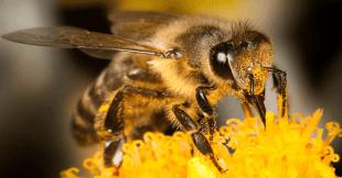 როგორ იბადება ფუტკარი? საოცარი 64 წამიანი ვიდეო